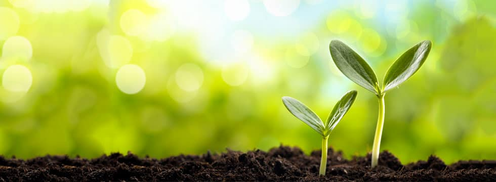 Green Ideas - Eco-Friendly Building & Home Design Articles - Ferguson